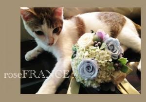 cat-bouquet1005